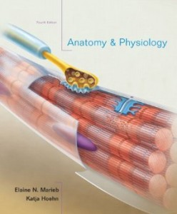 Test bank for Anatomy and Physiology 4th Edition by Marieb