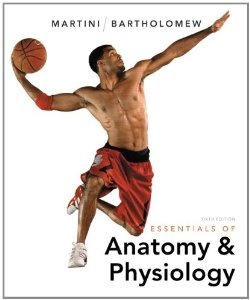 Test bank for Essentials of Anatomy and Physiology 6th Edition by Martini