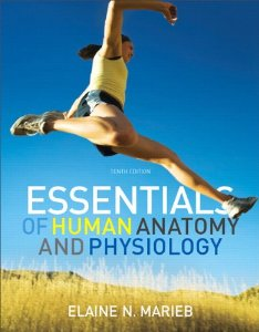 Test bank for Essentials of Human Anatomy and Physiology 10th Edition by Marieb