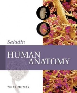 Test bank for Human Anatomy 3rd Edition by Saladin