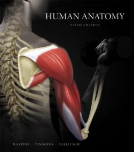 Test bank for Human Anatomy 6th Edition by Martini