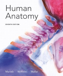 Test bank for Human Anatomy 7th Edition by Marieb