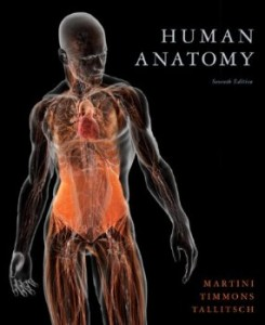 Test bank for Human Anatomy 7th Edition by Martini