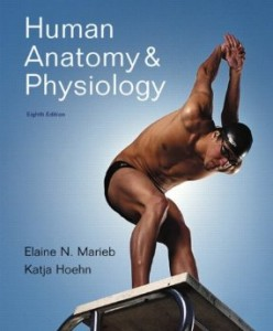 Test bank for Human Anatomy and Physiology 8th Edition by Marieb