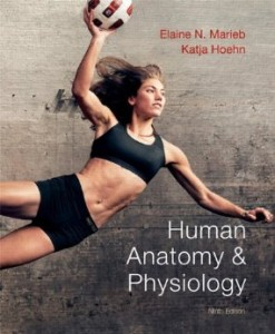 Test bank for Human Anatomy and Physiology 9th Edition by Marieb