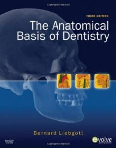 Test bank for The Anatomical Basis of Dentistry 3rd Edition by Liebgott